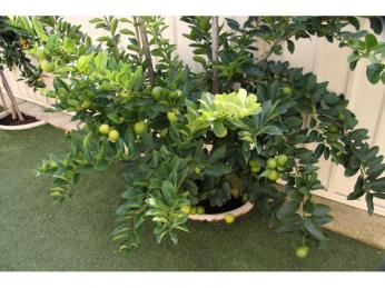 QUALITY HOME WITH FRUIT TREES - PETS CONSIDERED